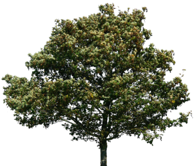 Trees Green Png PNG Images