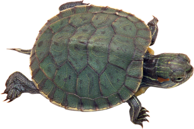 Turtle Icon Clipart PNG Images