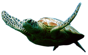 Turtle Amazing Image Download
