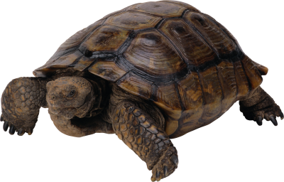 Box Turtle Free Download PNG Images