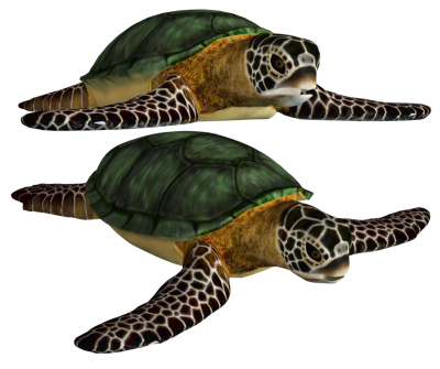 Sea Turtle Animal Image PNG Images