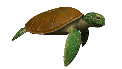 Sea Turtle PNG Images