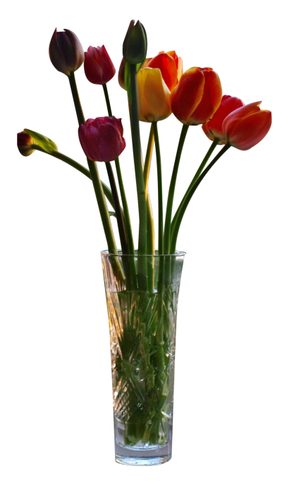 Tulips In Vase Cut Out Image