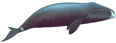 Whale Clipart PNG Photos PNG Images