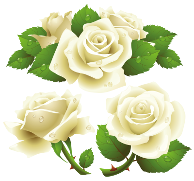 White Rose Cut Out Flowers PNG Images