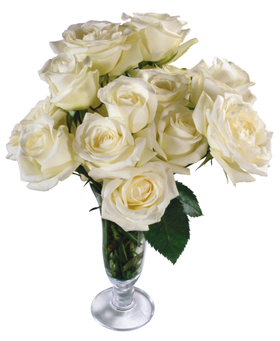 White Real Rose Vector