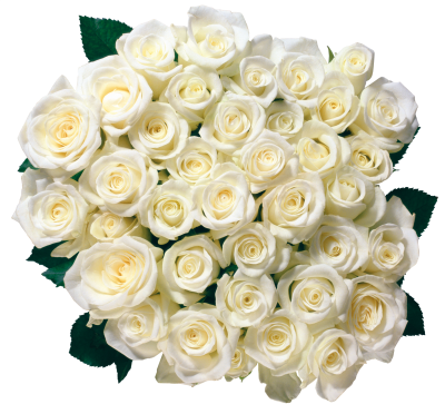White Rose Bucket Photos PNG Images