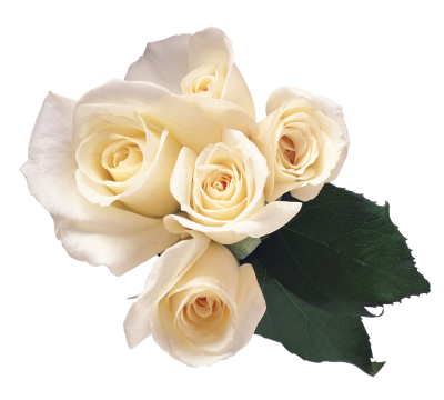 White Roses HD Photo Png PNG Images