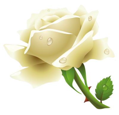 White Rose Best Png PNG Images