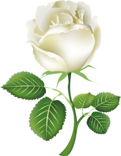 White Rose Clipart Transparent PNG Images