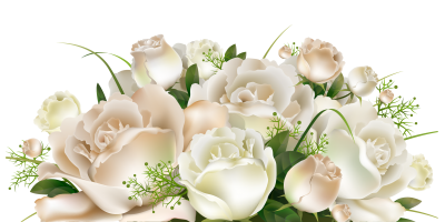 Download White Rose Bucket PNG PNG Images