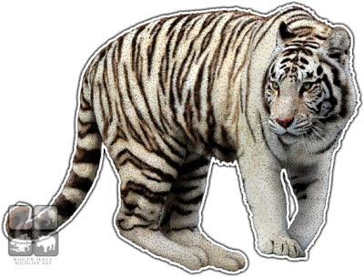 White Tiger Cut Out PNG Images