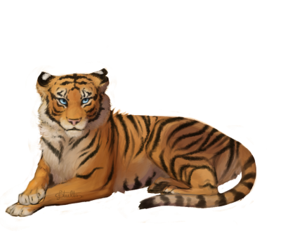 White Tiger Transparent Picture