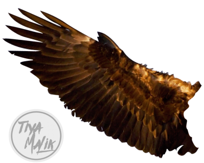 Eagle Wings Picture PNG Images