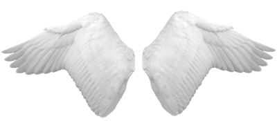 White Wings Pictures PNG Images