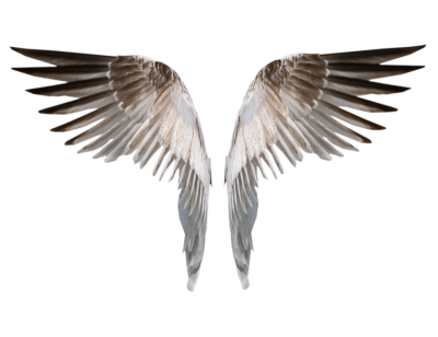 Wings Icon PNG Images
