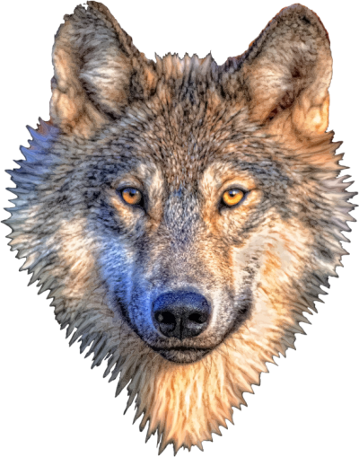 Cream Wolf Head Pictures PNG Images