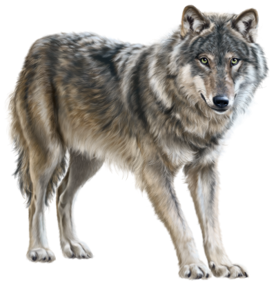 Wolf Free PNG PNG Images