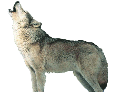 Wolf Icon Clipart PNG Images