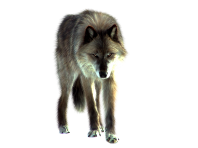 Wolf Free Download PNG Images