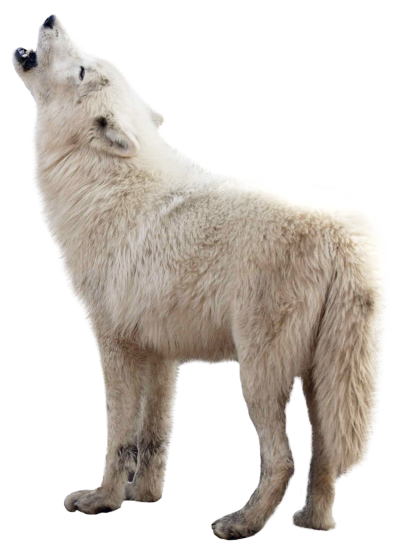 Wolf HD Image PNG Images