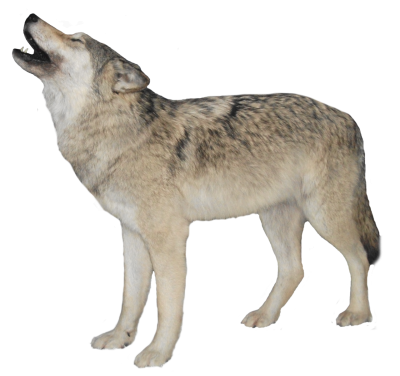 Wolf Clipart PNG File PNG Images