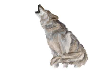 Wolf Transparent PNG Images