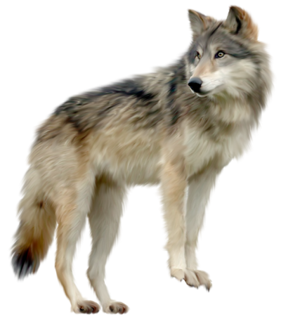 Wolf Free Download Transparent PNG Images